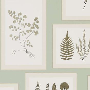 Обои Sanderson | Коллекция Woodland Walk Wallpapers Fern Gallery