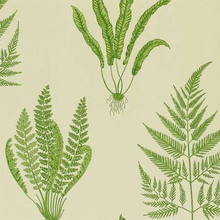 Обои Sanderson | Коллекция A Painters Garden Wallpapers Woodland Ferns