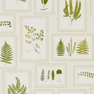 Обои Fern Gallery Ivory Green 215712